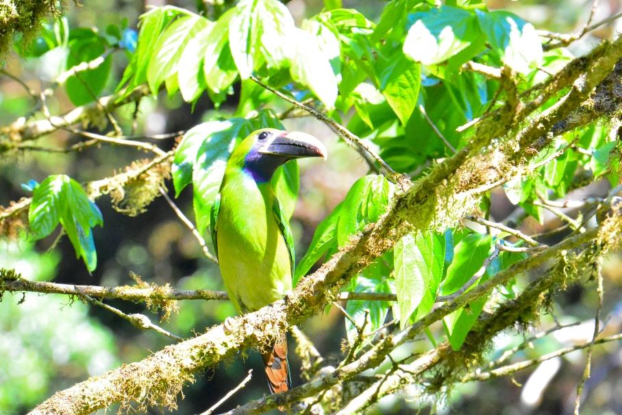 Monteverde-130
